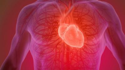გვაქვს თუ არა ადამიანებს სიცოცხლეში გულისცემის განსაზღრული რაოდენობა?!